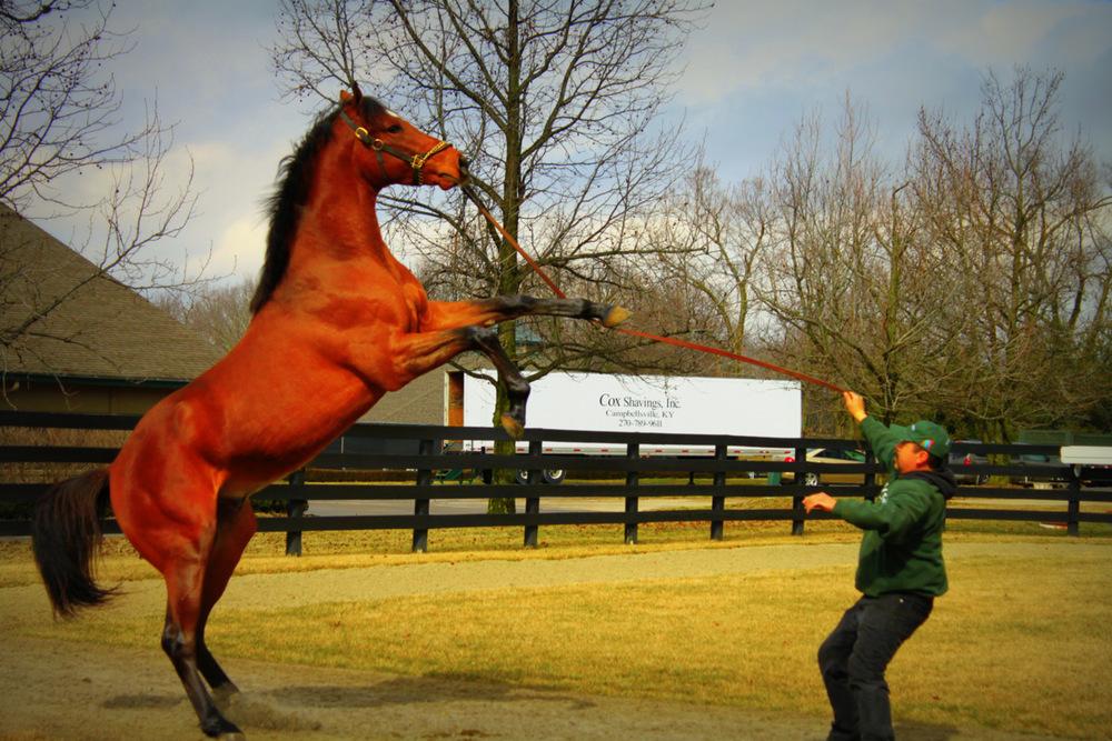 Silvana-horse-photo.jpg