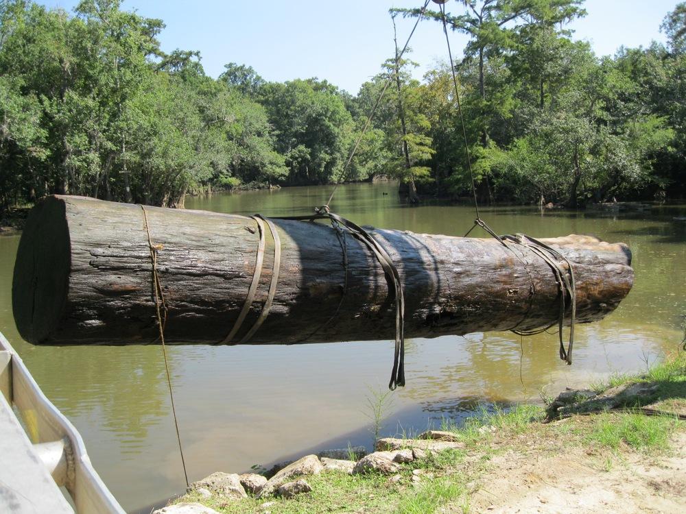 Sinker-Cypress-in-water.jpg