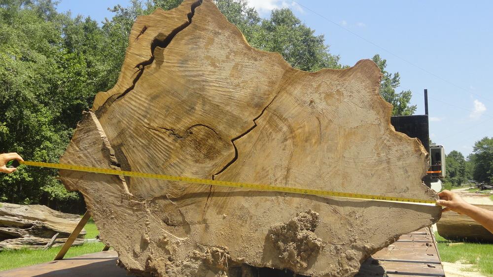 Sinker-Cypress-Log-008.jpg