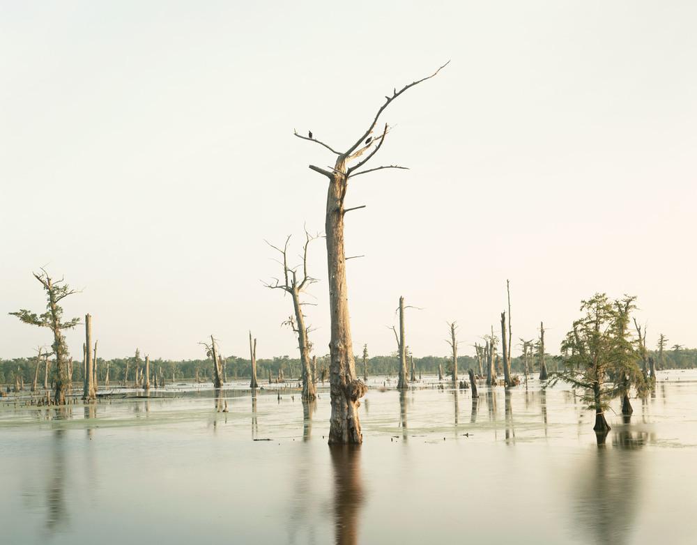 MisrachCypressSwamp1.jpg