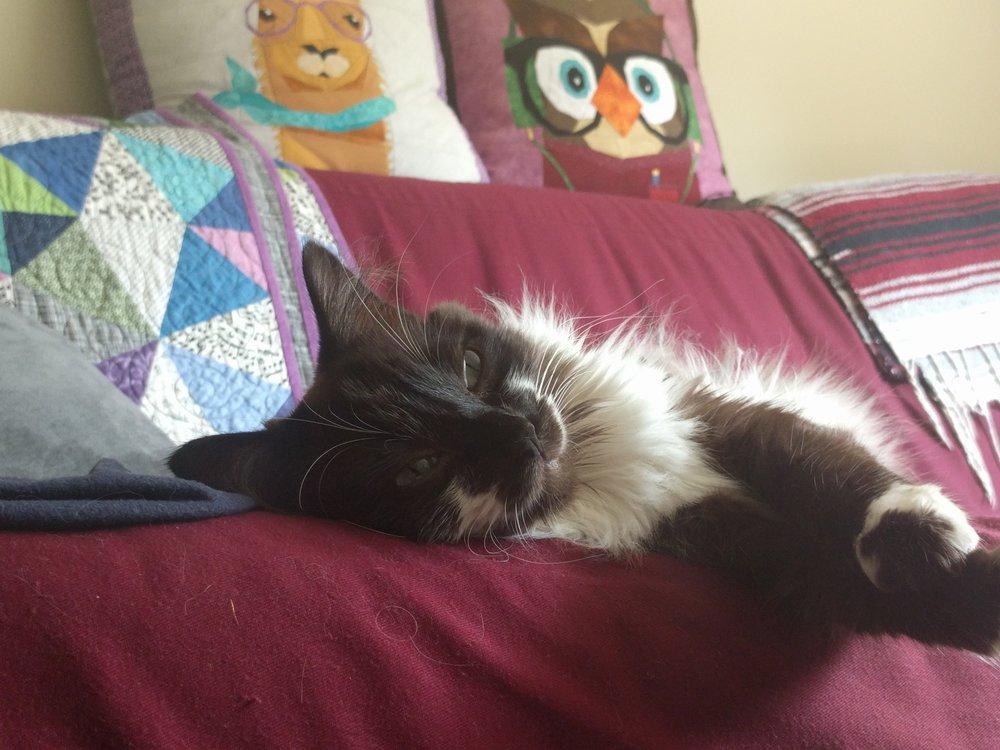 spencer-winston-cat-1.jpg