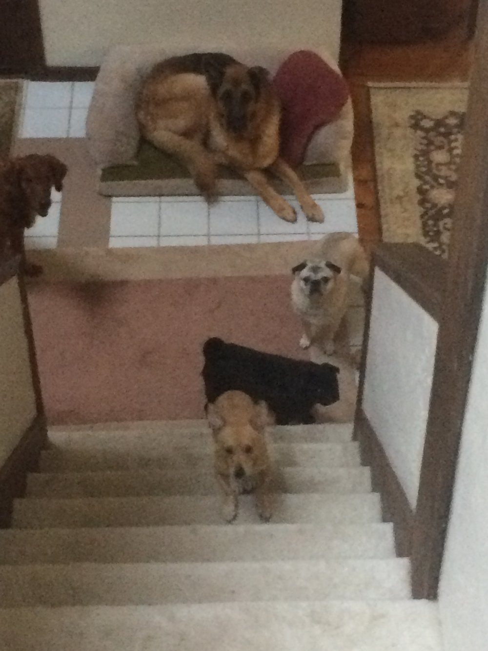 """Almost the whole gang - Hank, Coco, Rufus, Daisy, and Rocky (in descending order)"""