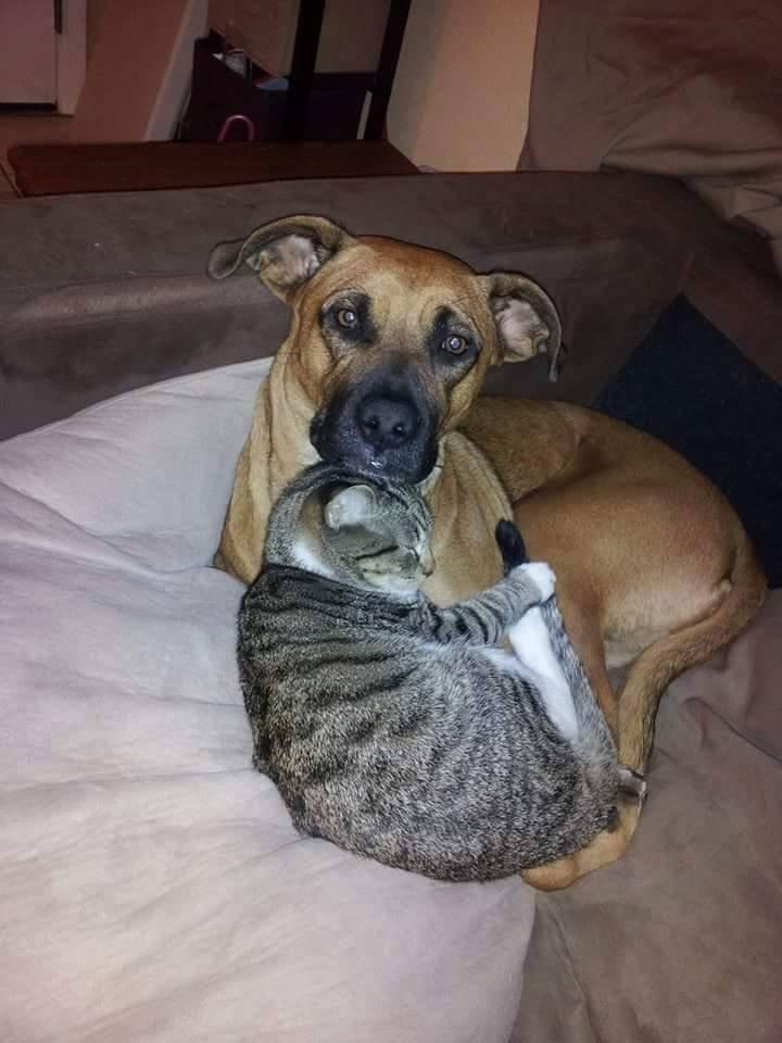 arcaehl-lost-spellweaver-cat-and-dog.jpg