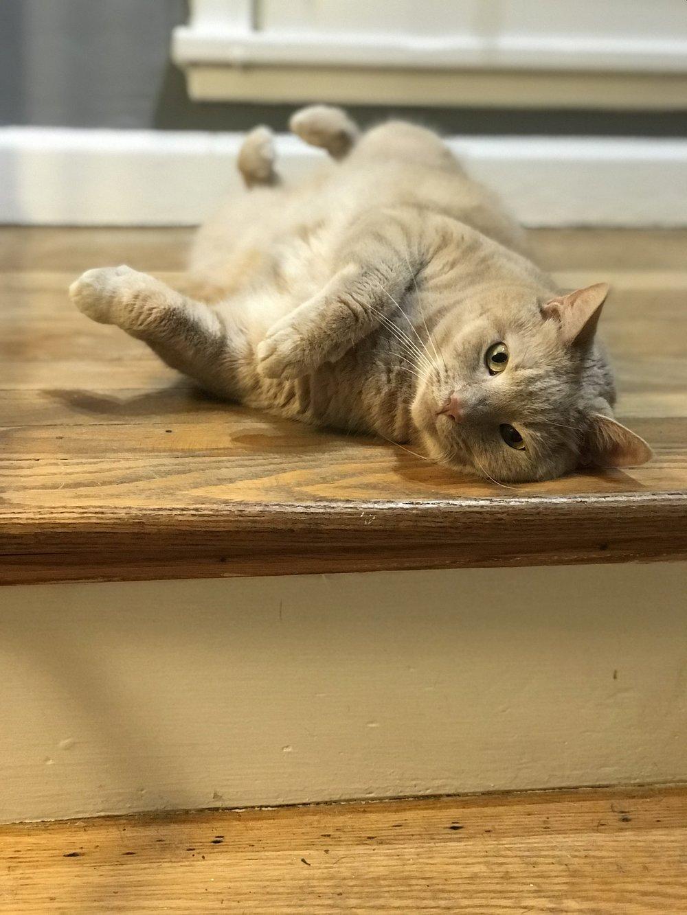 becca-ollie-cat.jpg