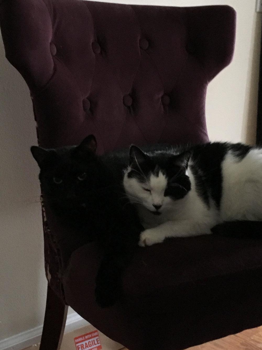 zelda-cats - Copy.jpg