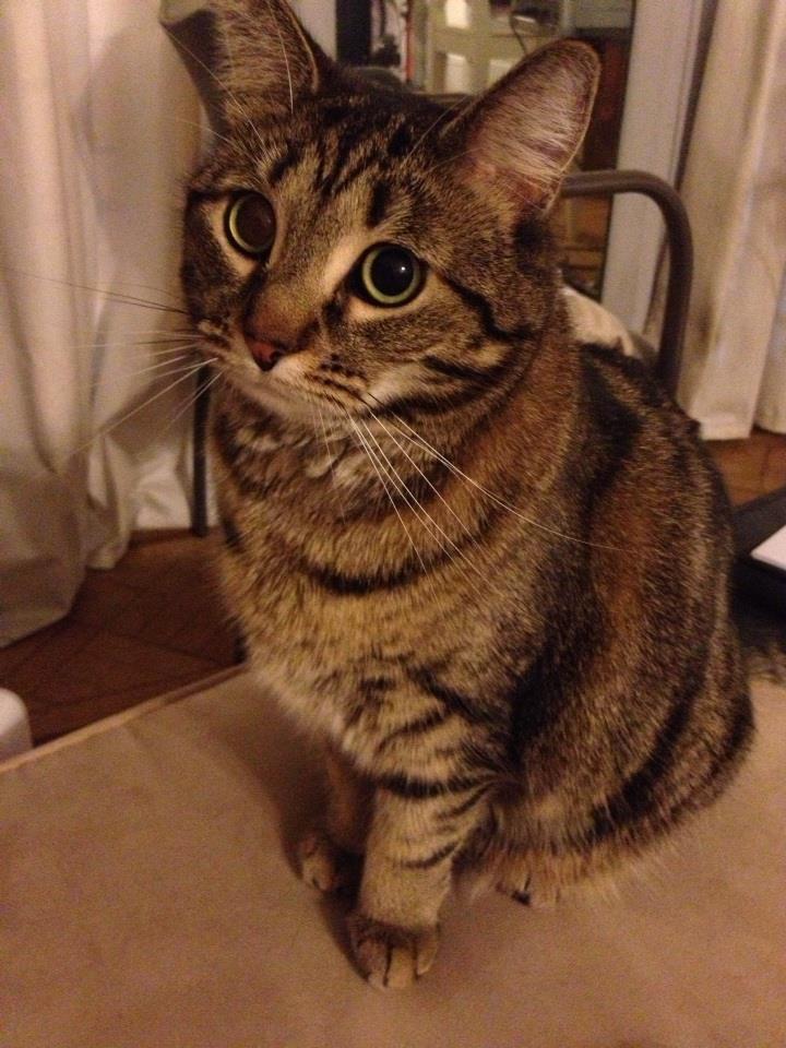 xantar-fearless-aeronaut-cat-schrodie.jpg