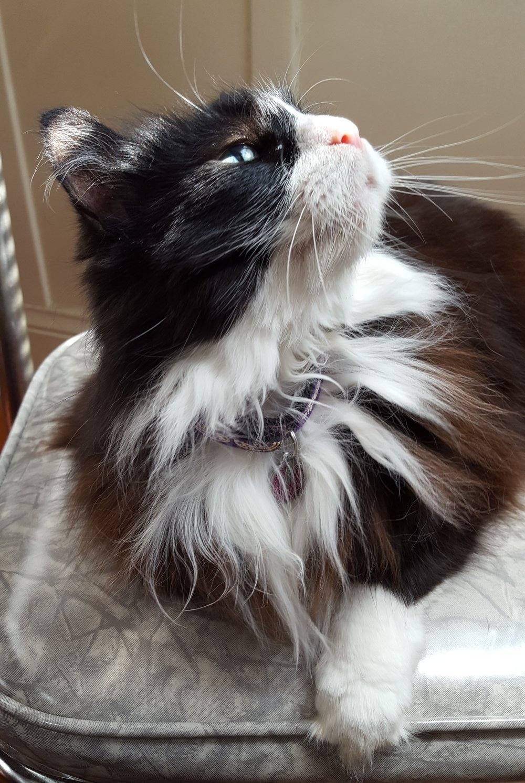 mo-cat-parsnip-1.jpg