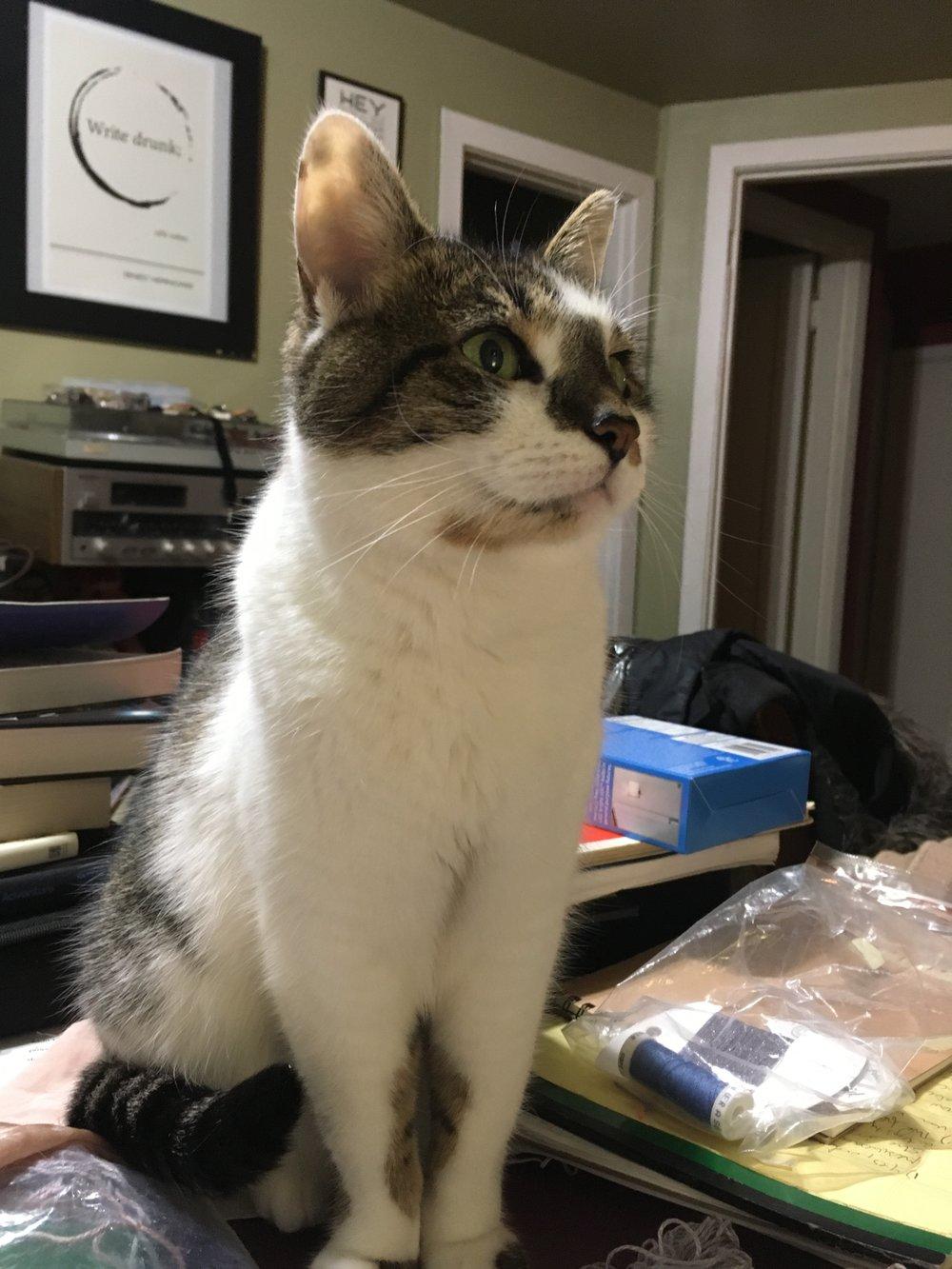 lephra-master-manipulator -cat-mitzy-3.JPG