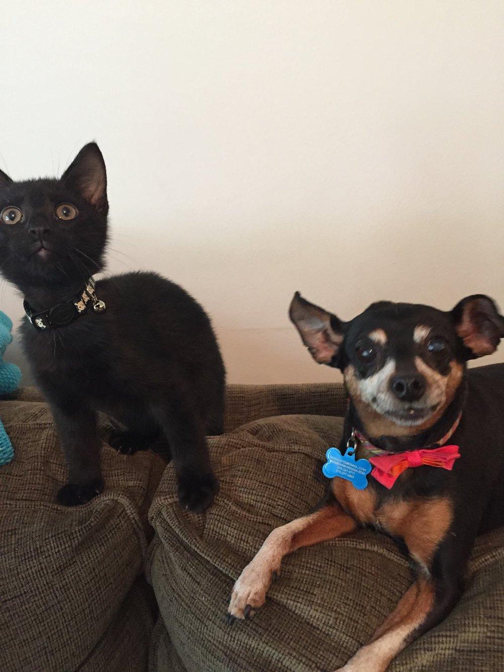mary-veiled-reckoner-cat-dog-max-penny-2.jpg