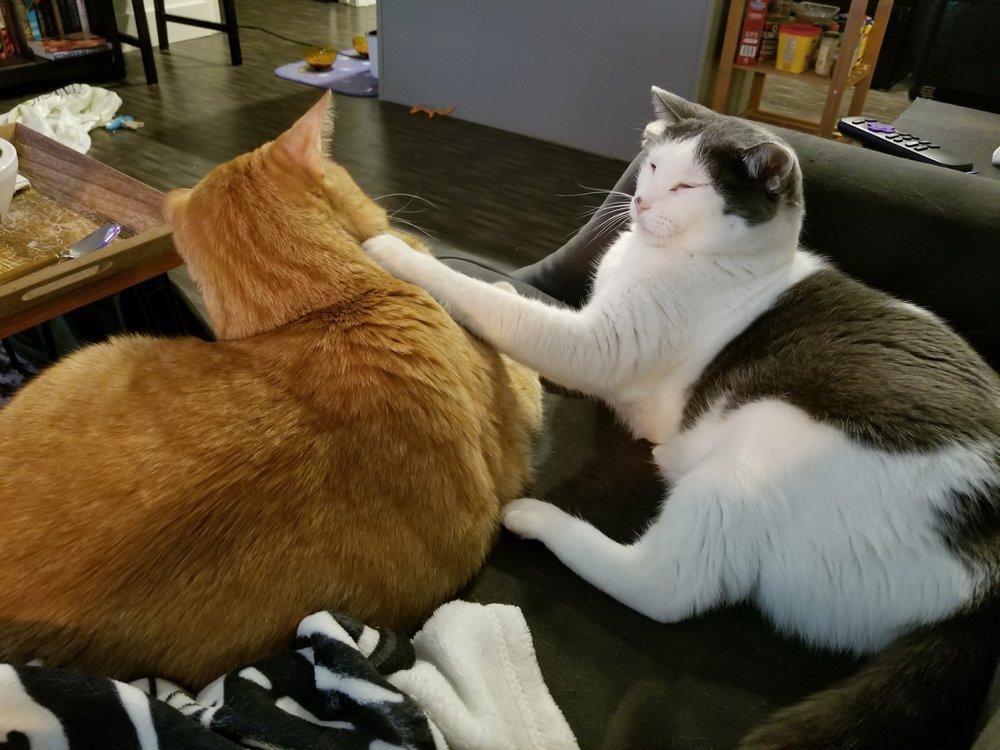 rubius-rascal-cat-angus-mcfluffington-leelo-muffinbutt-1.jpg