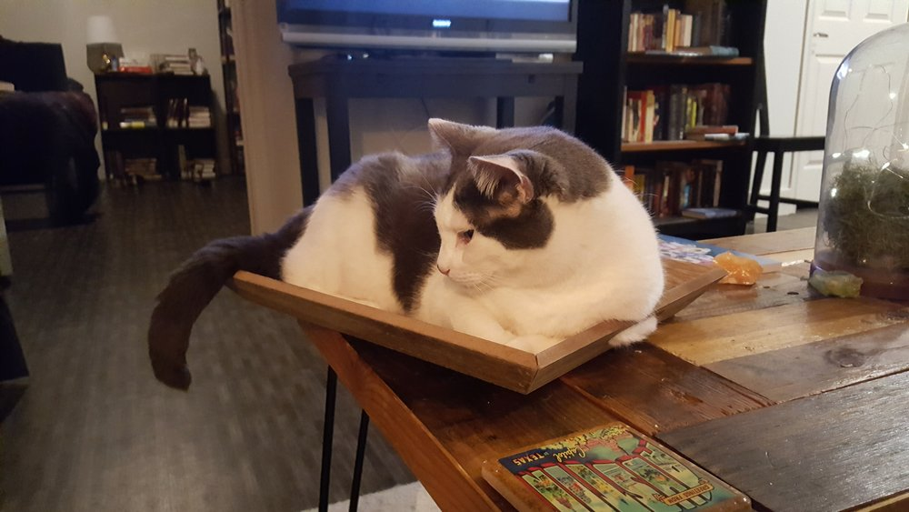 rubius-rascal-cat-leelo-muffinbutt-3.jpg