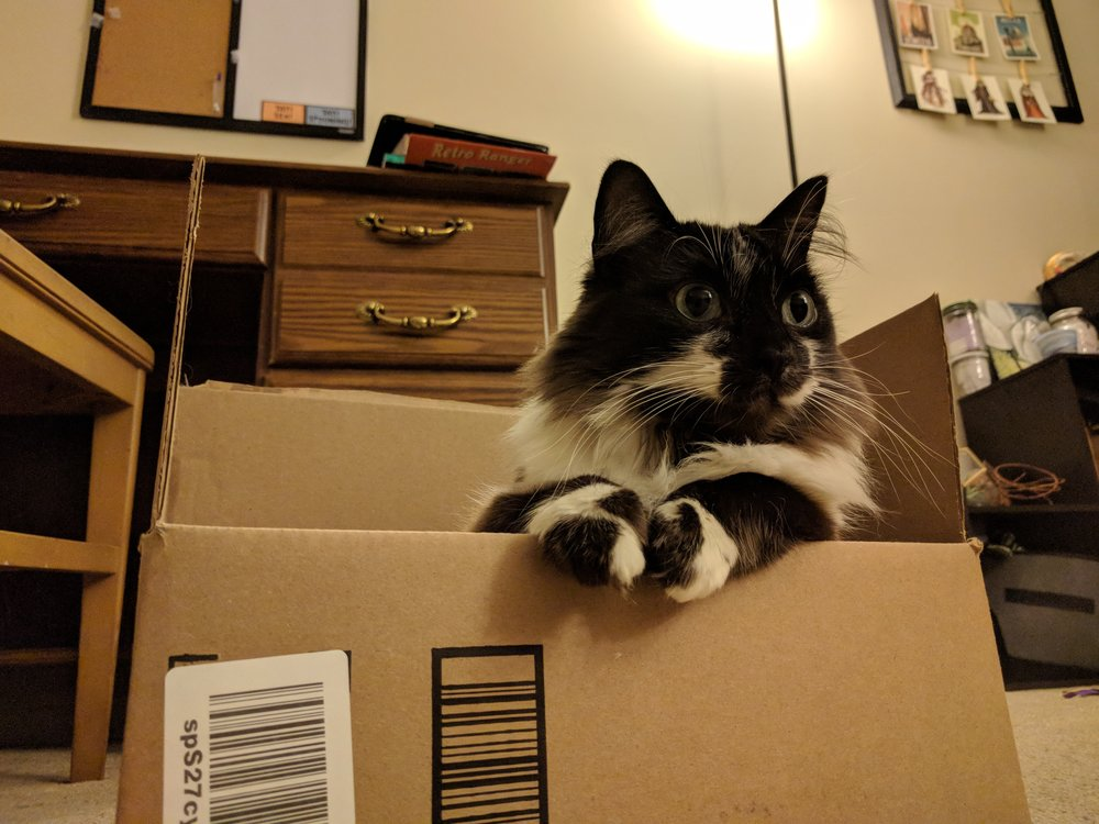 arkyn-the-enduring-cat-winston-box.jpg