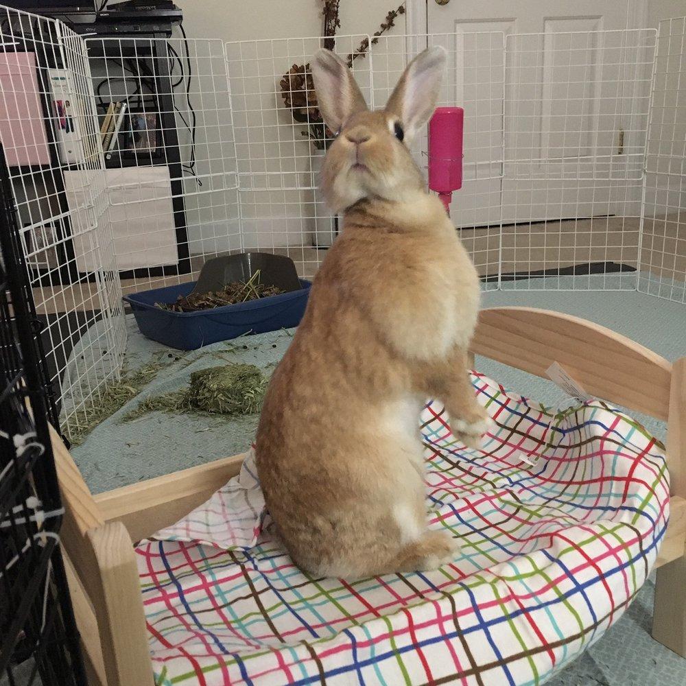 silnia-shearfang-bunny-penny-2.jpeg