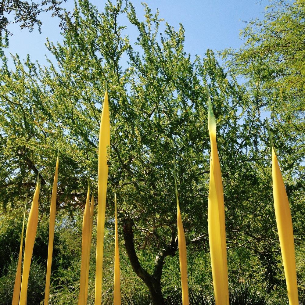 Desert Botanical Garden & CHIHULY