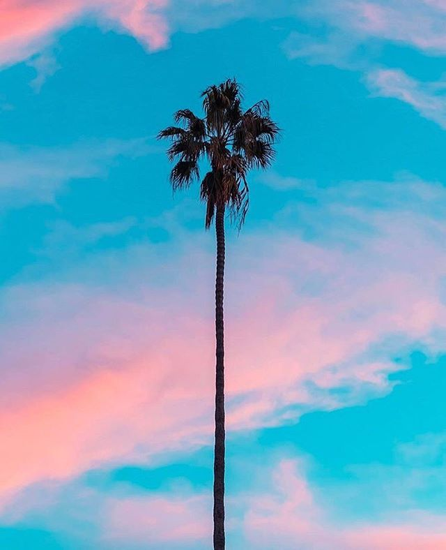 🌴 Red sky at night... you know the rest. 📷: @chriscreature #abmlifeiscolorful #abmhappylife #acolorstory #flashesofdelight #dscolor #dsshapes #dspink #myunicornlife #livecolorfully #huffpostgram #oklcolorstory #ilovecolor #dslooking #🌴