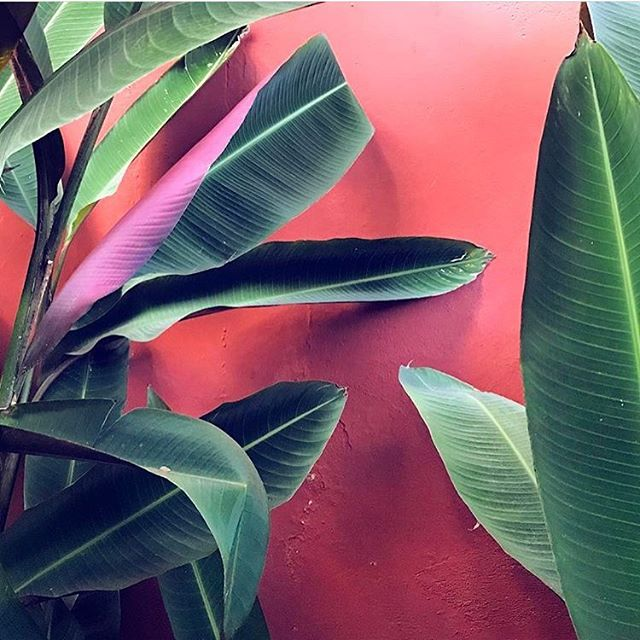 It's the weekend, please take me here. 😍 Oh, did I ever tell you about the time my bird of paradise plant has a centipede hatch... in my house!? Well that happened. 😱 Another fantastic, dreamy shot by @luna_zorro! #abmlifeiscolorful #abmhappylife #acolorstory #flashesofdelight #dscolor #dsshapes #dspink #myunicornlife #livecolorfully #huffpostgram #oklcolorstory #ilovecolor #dslooking #birdofparadise #ihavethisthingwithwalls #dswalls #dspink