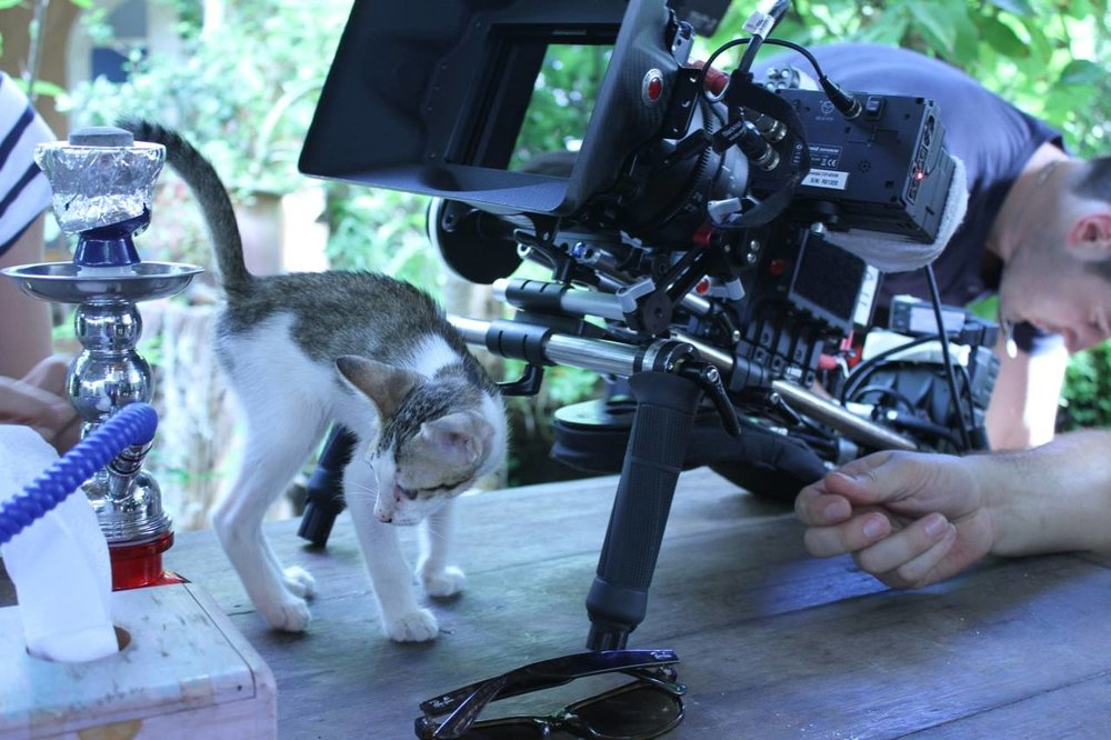 Stray Cat's visiting set in Thailand.jpg