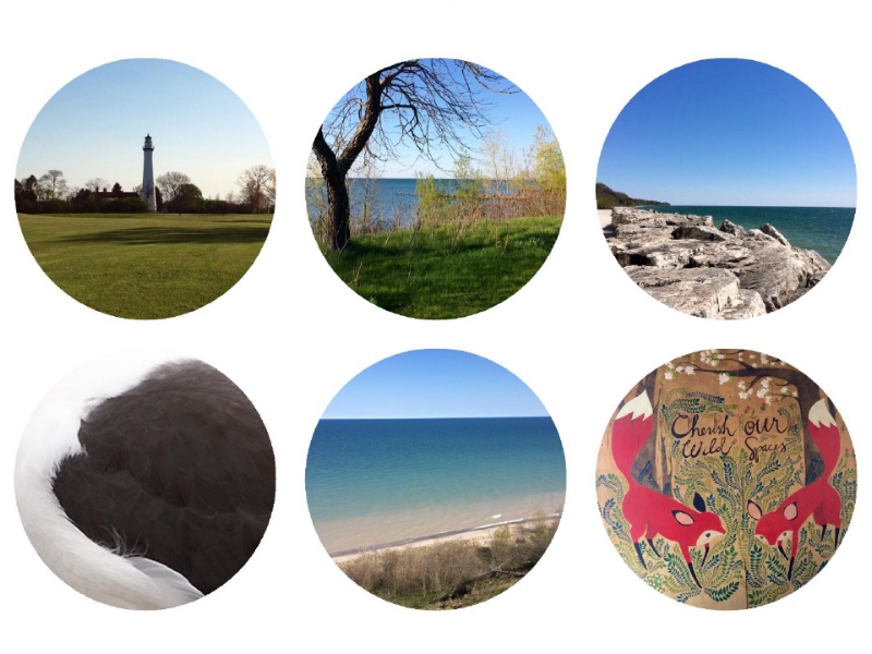 Top Row: Wind Point Lighthouse, Wind Point, Port Washington Bottom Row: Lesser Black Backed Gull, Virmond Park and Brenner Brewing Co. Photographs: Jennifer Hoffman 2017