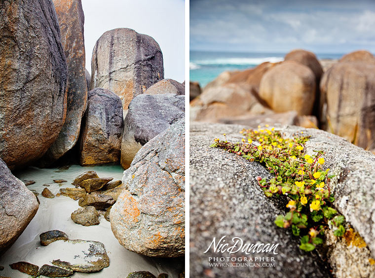 Thank you  Nic Duncan  for sharing your stunning photo's with  Albany Region