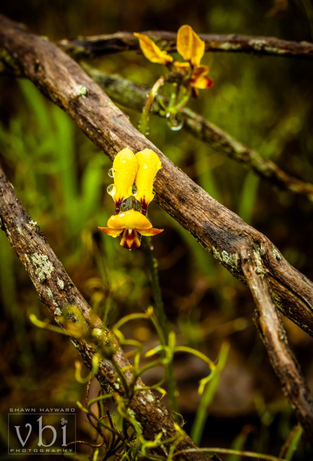 orchids-127.jpg
