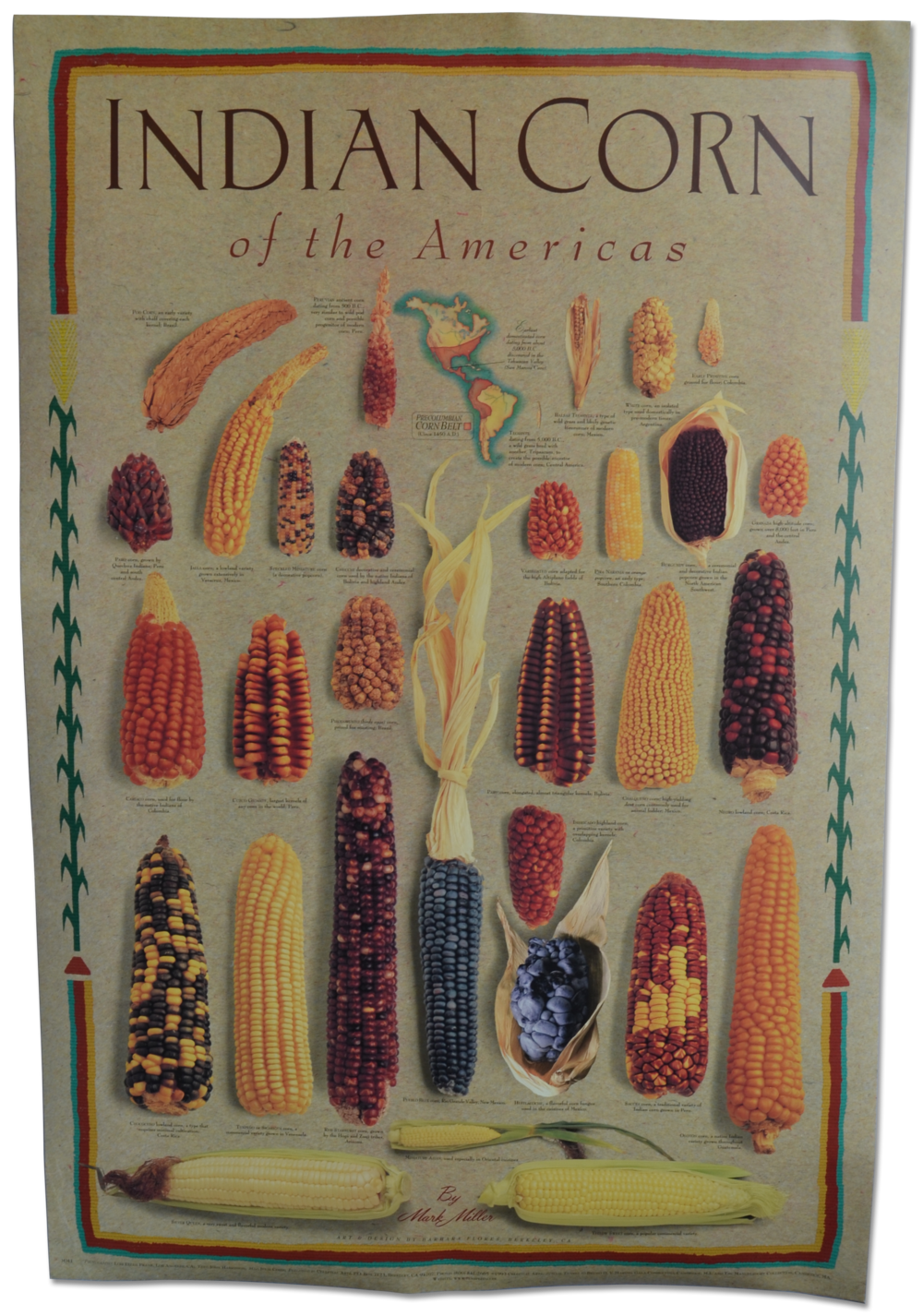 Indian Corn of Americas