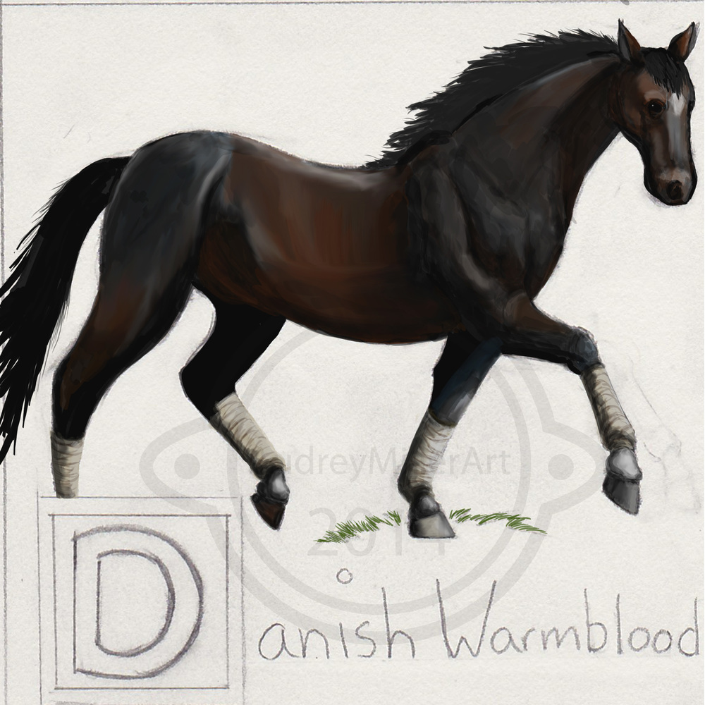 """D is for Danish Warmblood"" - ABC's of Horses"