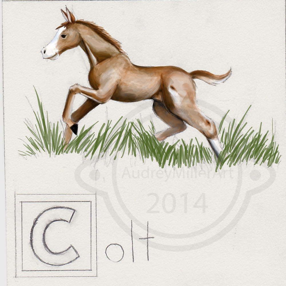 """C is for Colt"" - ABC's of Horses"