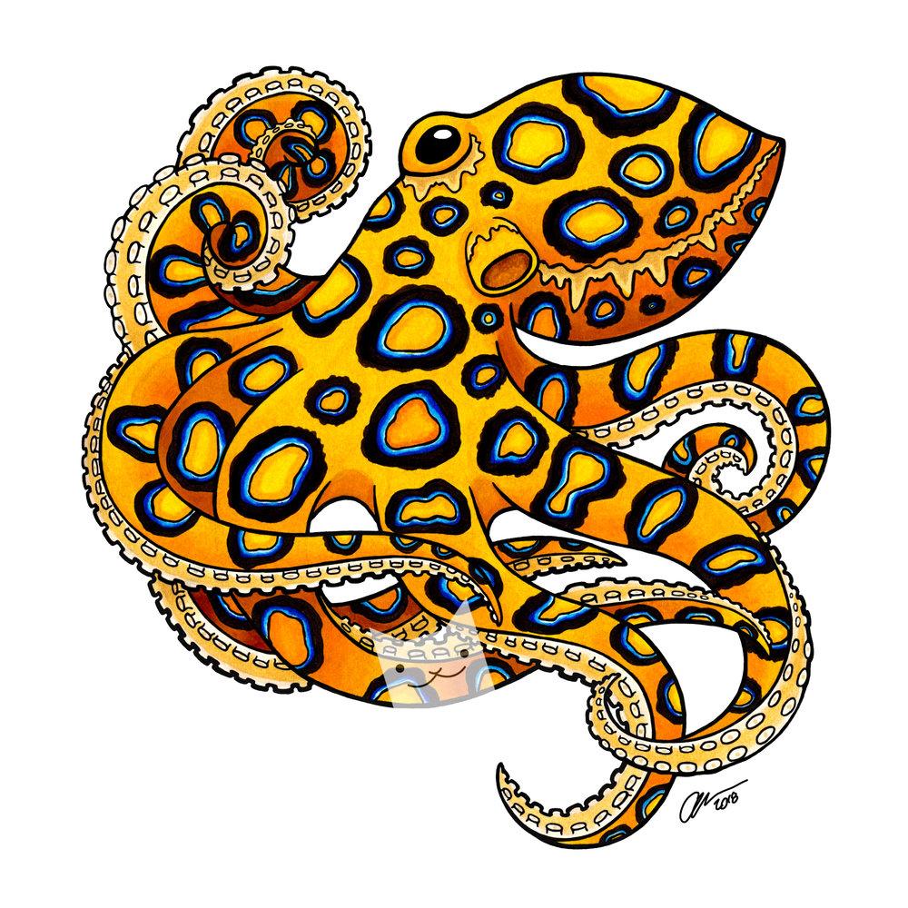 blue ring octopus.jpg