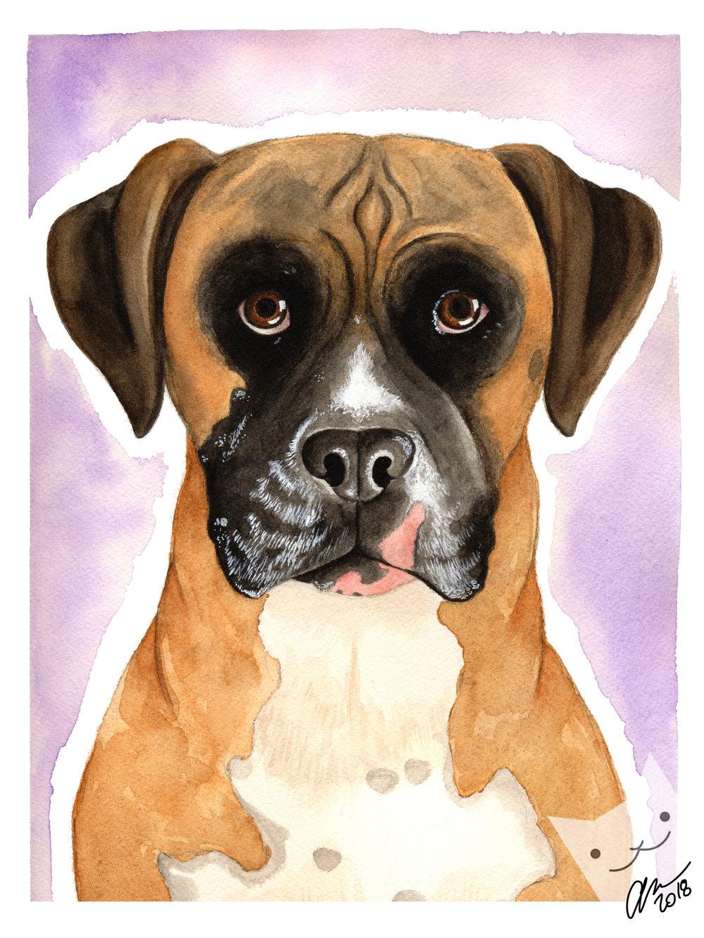 Riley - dog portrait.jpg
