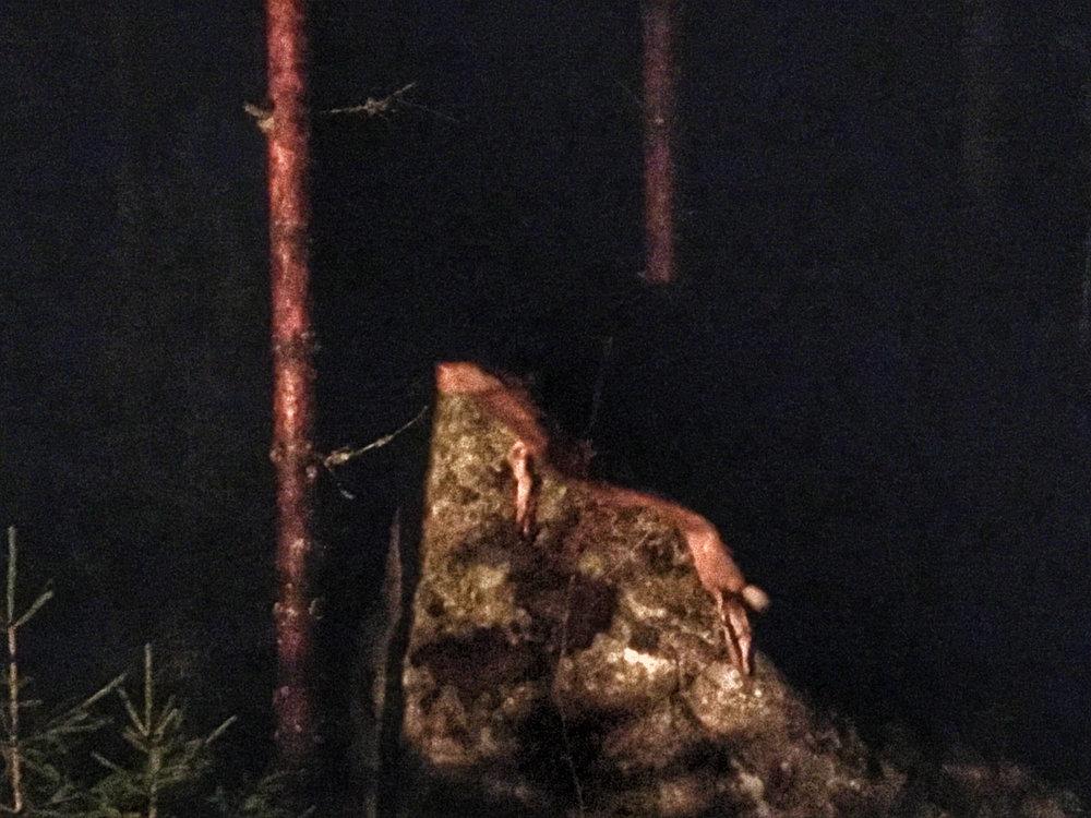 Teatterikorkeakoulun Ritualistinen teatteri ja -esitystaide suuntasi Karstuun rituaalijaksolle kolmeksi päiväksi. Mukana oli myös shamanismin grand-old-man ja puolikas mustajalkaintiaani, Charles H. Lawrence. Monta sykähdyttävää ja unohtumatonta rituaalia. Kuvassa eläin kalliolla.