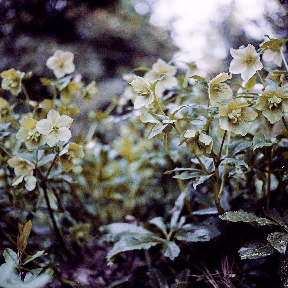 In Bloom -