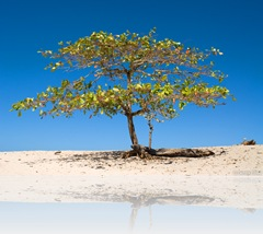 shade_tree_on_the_beach_4069
