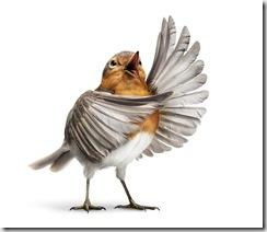operabirds0