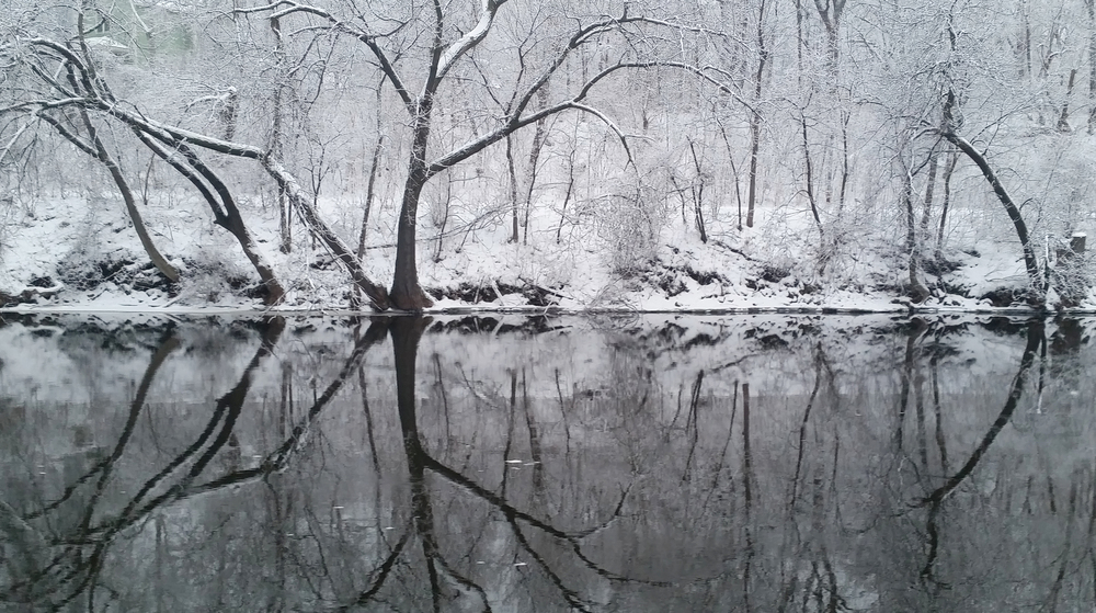 """This morning, the river gave a beautiful reminder about the life of trees. The expansive presence we see and experience above ground is equally matched by the root system they grown below ground. They are an inspiring example of a balanced system, a strong living being. And a powerful reminder that securing your foundation is truly the only sustainable way to reach higher."" January 2016"
