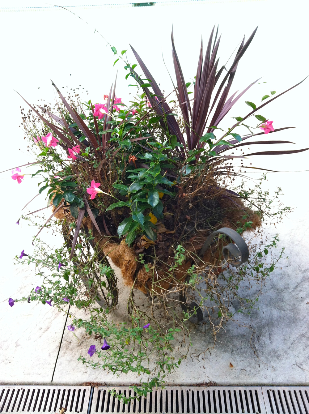 Transform overgrown summer plantings to curb appealing Fall flowers