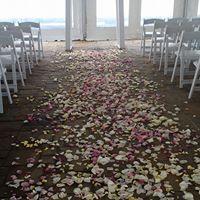 Allys rose petals.jpg