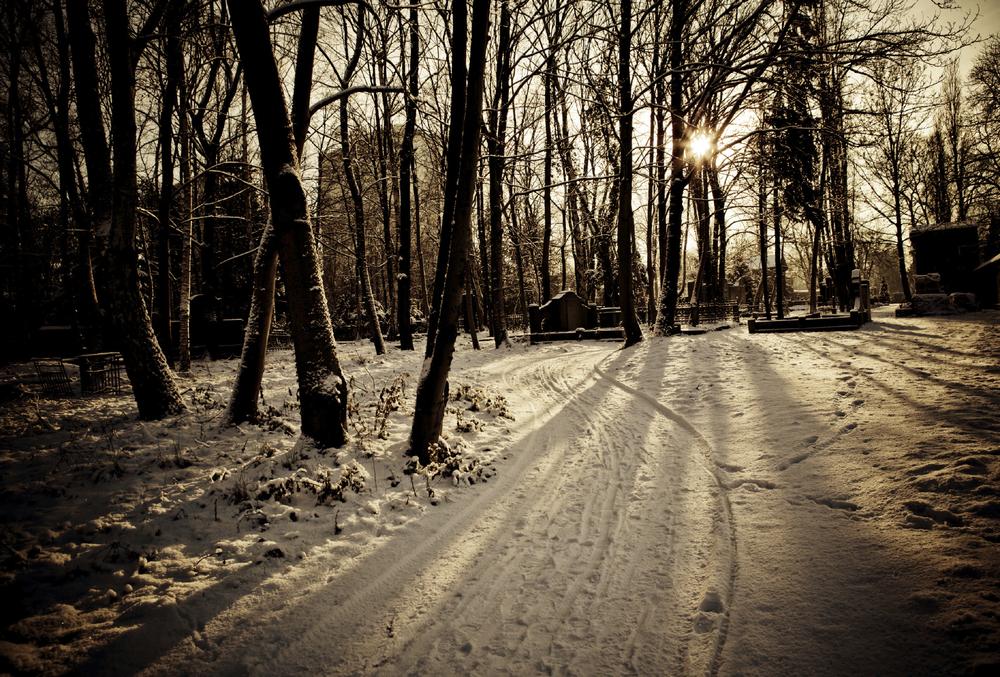 wintercholia.jpg