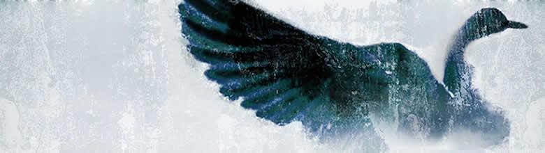 wild goose Holy Spirit.jpg