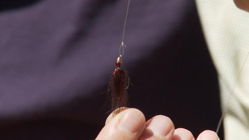 Brian Chan holding a maroon bead-headed leech
