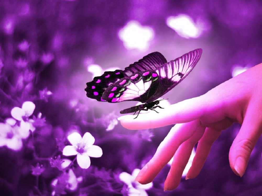 Beautiful-Butterflies-butterflies-9481170-1600-1200.jpg