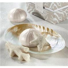 sea shells.jpg