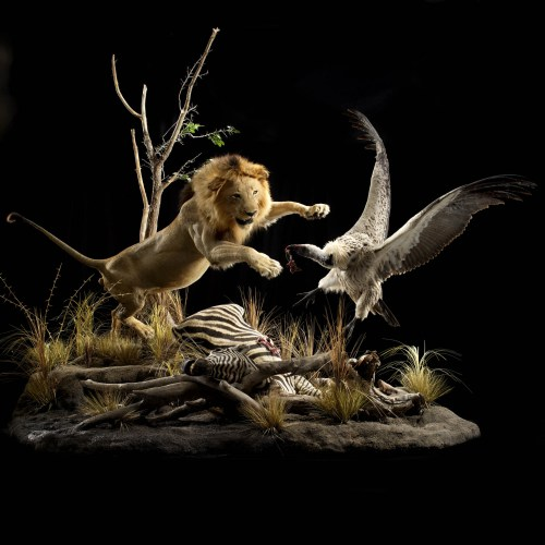 lionvulture-0003.jpg