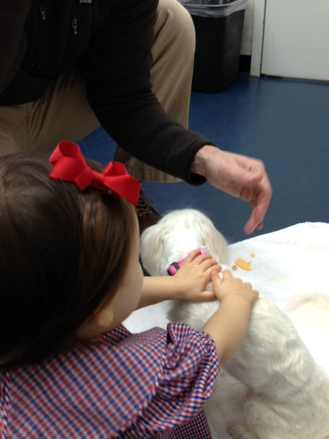 petting lolli