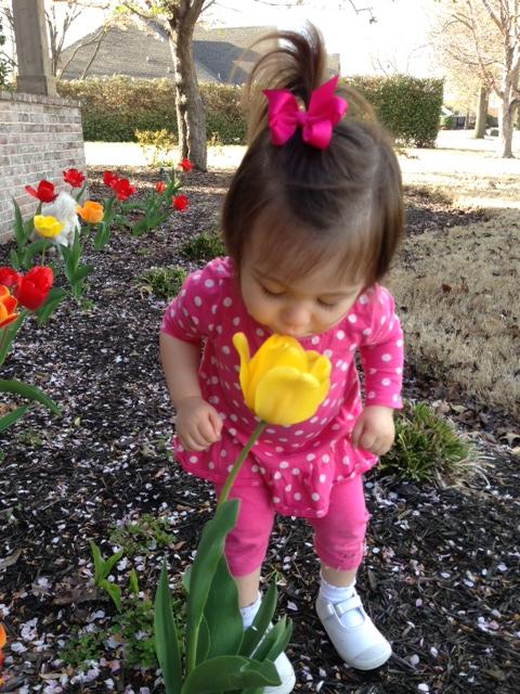 tulip sniffing