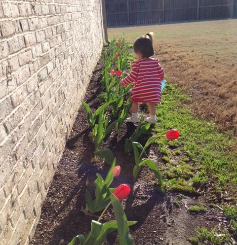 tulip check