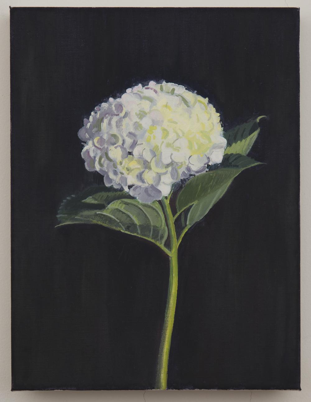 Garden Flower, 2013, oil on linen, 16 x 12 inches