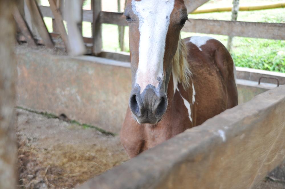 My horse, Luna's offspring