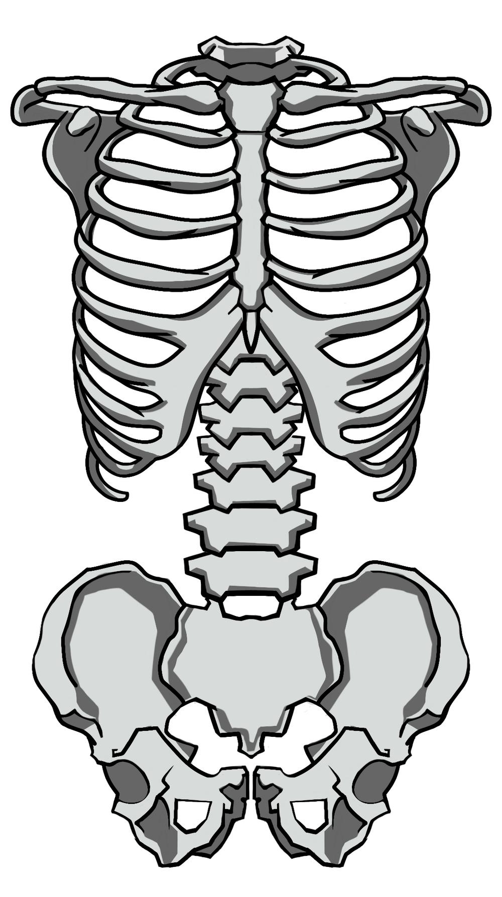 dd2.back muscle LONG cut3-1.jpg