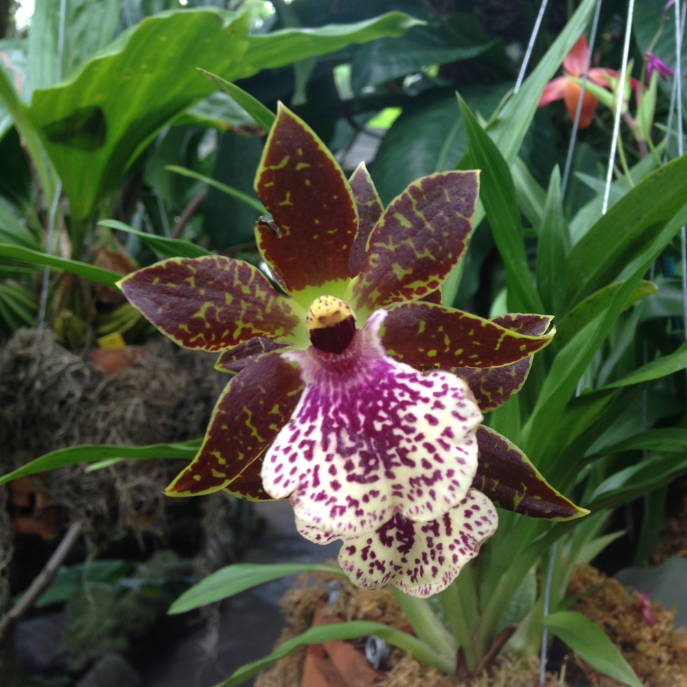 Orchid Mania 2015