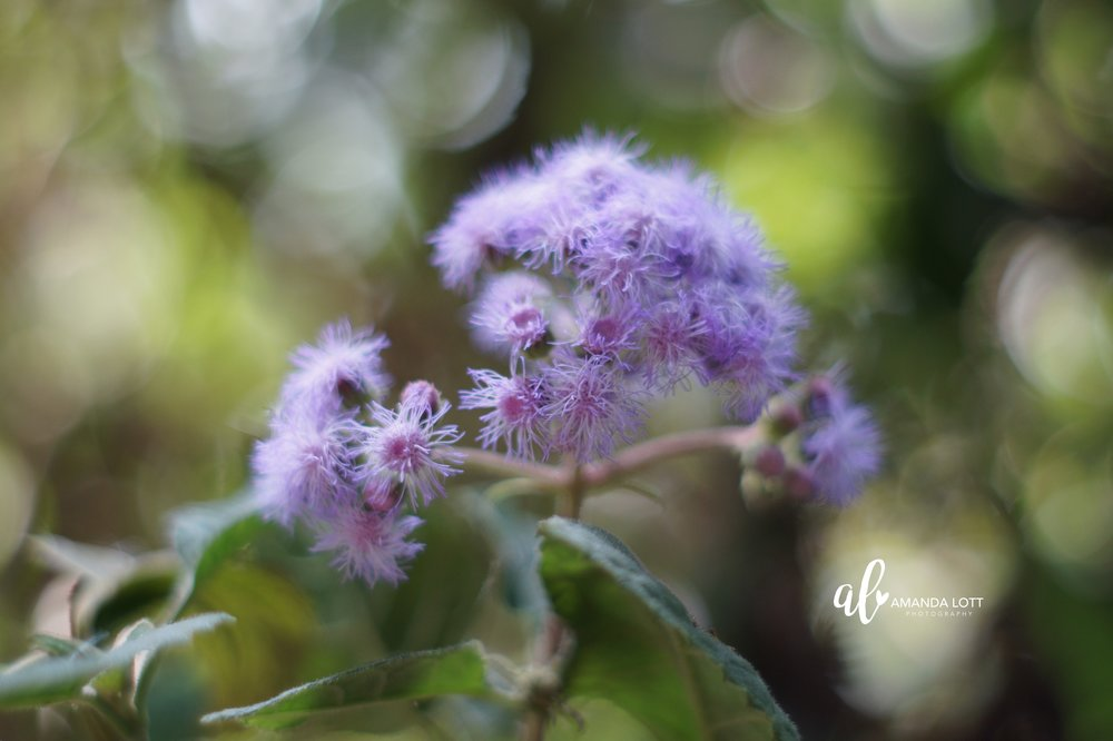 Botanical Garden 2_AL.jpg